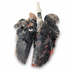 BioQuest� Inflatable Lungs - Simulated Smoker�s Lungs