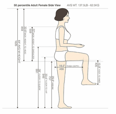 50 percentile Adult Female Side View