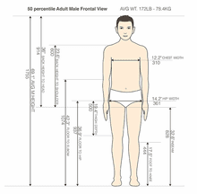 50 percentile Adult Male Frontal View