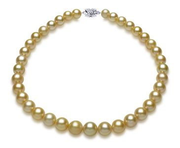 12.2mm x 12.7mm Golden South Sea Pearl Necklace