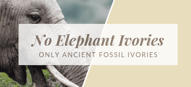 No Elephant Ivories - Only Ancient Fossil Ivories