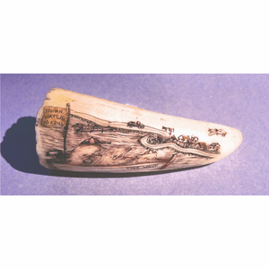 "Scrimshaw Comic Sperm Whale Tooth ""People Watch"" Gallery"