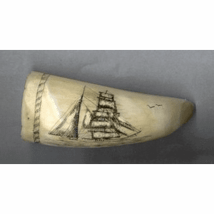 "Scrimshaw Sperm Whale Tooth ""Barkentine William G. Irwin""  Gallery"