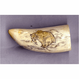 "Scrimshaw Sperm Whale Tooth ""Grizzly With Salmon"" Gallery"