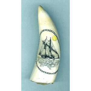 """Scrimshaw Sperm Whale Tooth """"Yacht America"""" Gallery"""