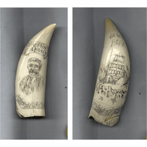 "Scrimshaw Sperm Whales Tooth ""Ice Ship Bear"" Gallery"