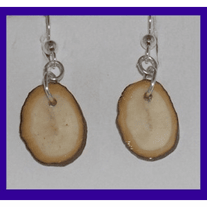 Simple Bark-Rimmed Paleo Indian Earrings Fossil Walrus Ivory $24.50
