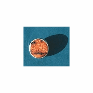 Simple  Circle Pin  With  Fossil  Ivory Sold