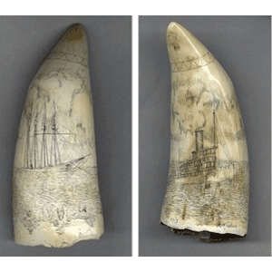 "Sperm Whale Tooth""Tow Over the Columbia River Bars"" Gallery"