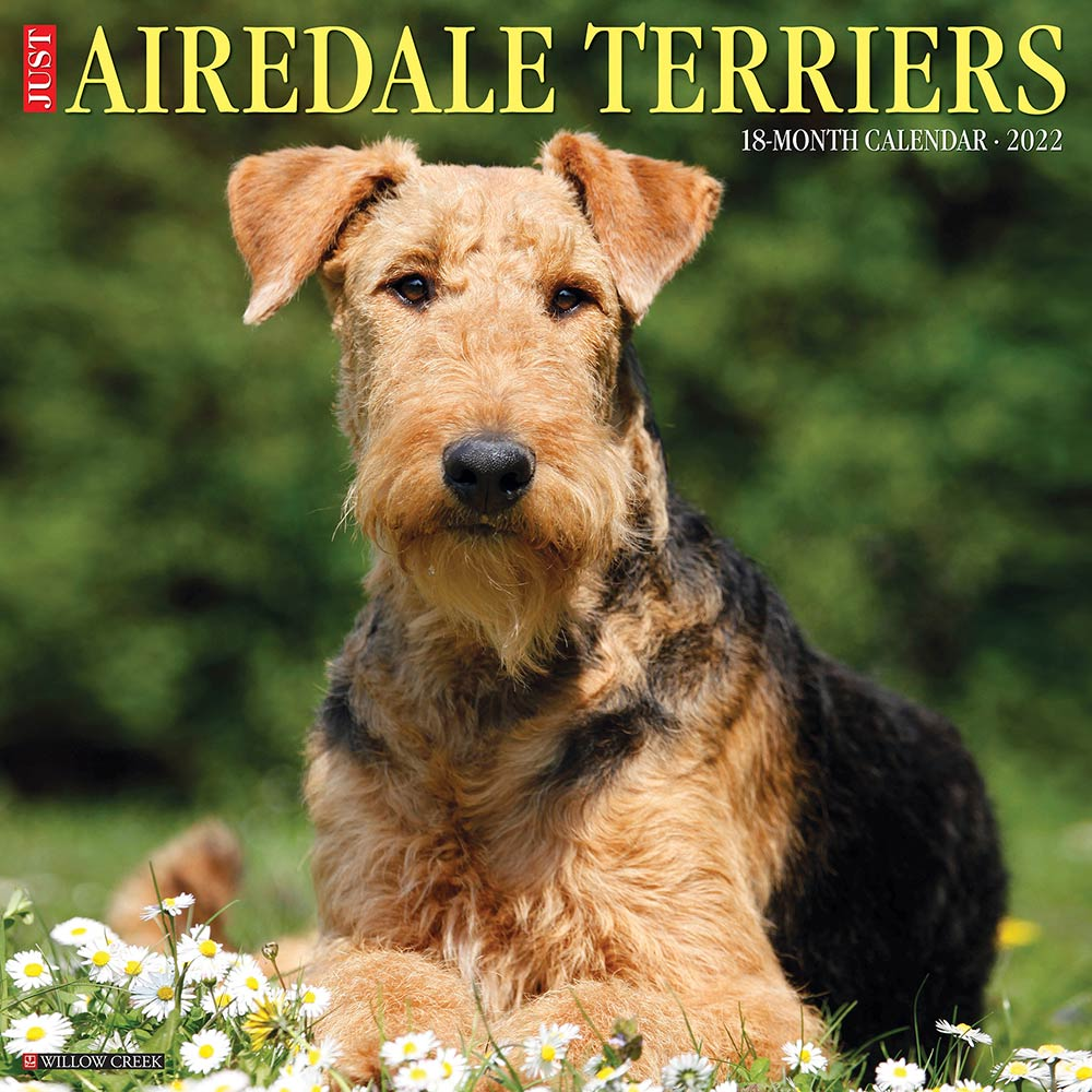 2022 Airedale Terriers Calendar Willow Creek