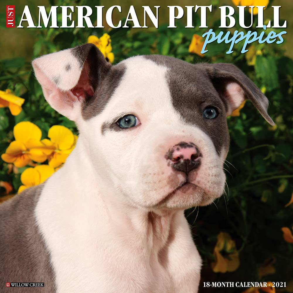 2021 American Pit Bull Terrier Puppies Calendar Willow Creek