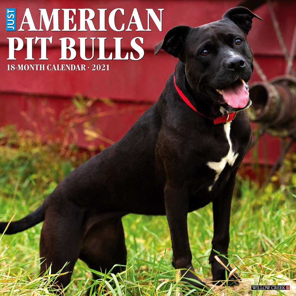 2021 American Pit Bull Terriers Calendar Willow Creek
