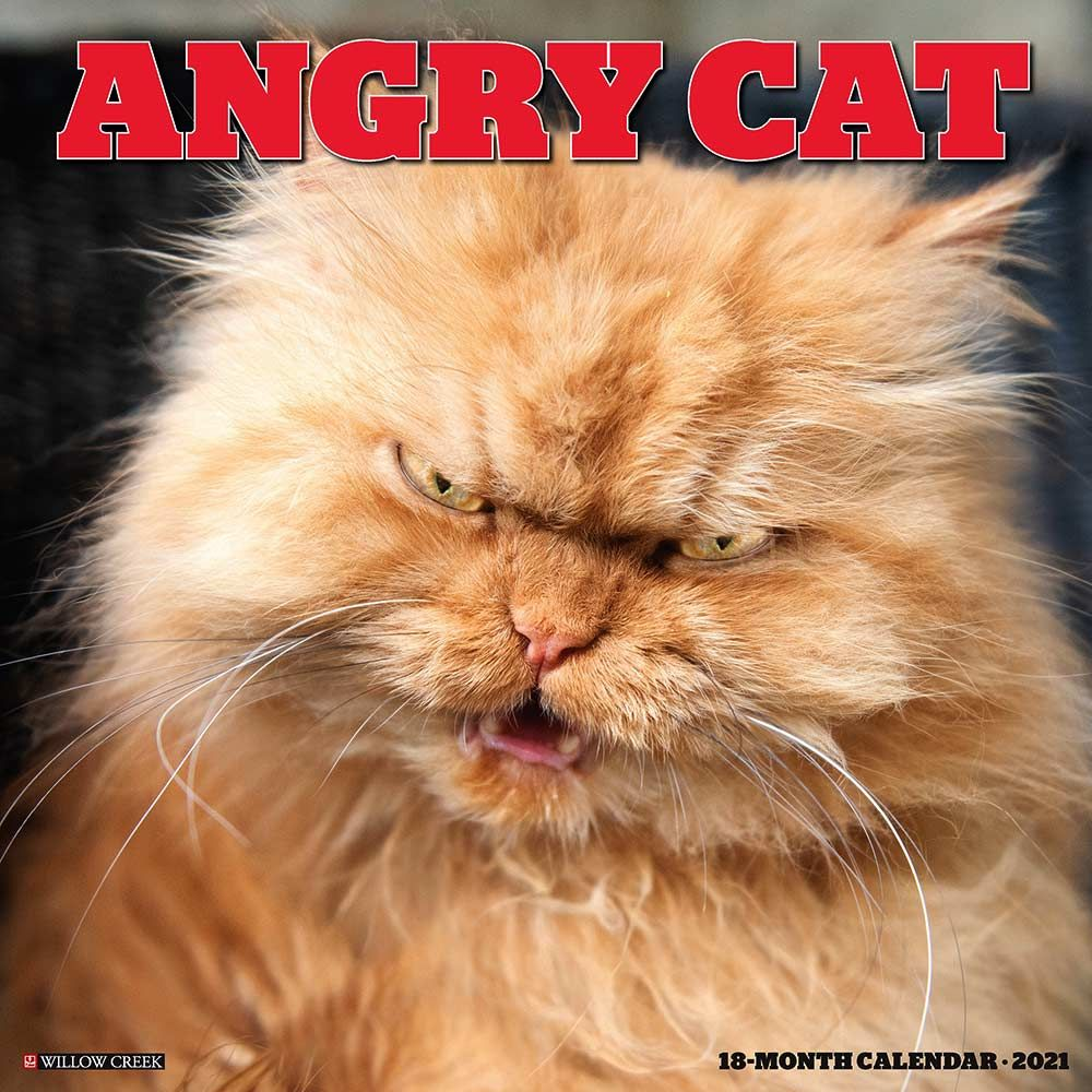 2021 Angry Cat Calendar Willow Creek Press