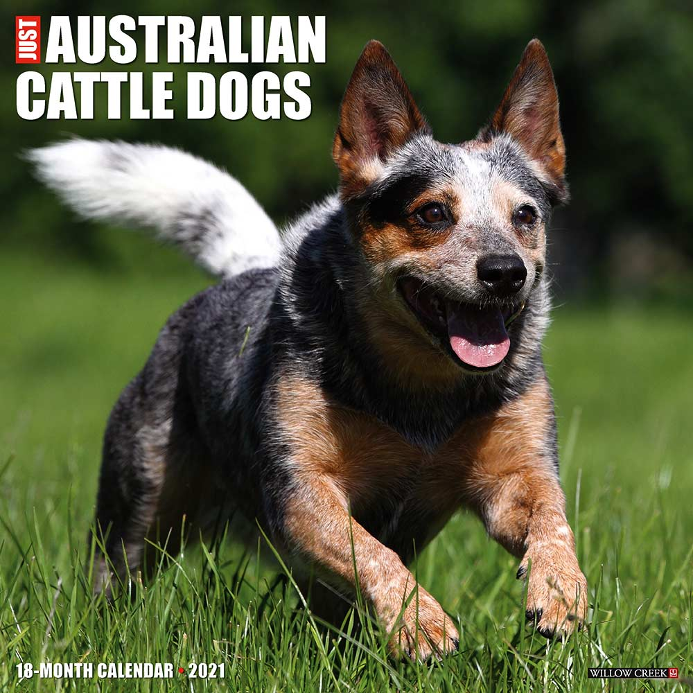2021 Australian Cattle Dogs Calendar Willow Creek