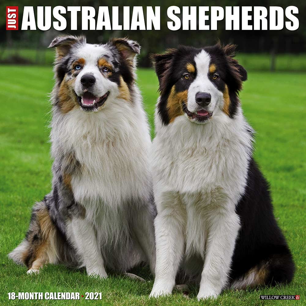2021 Australian Shepherds Calendar Willow Creek