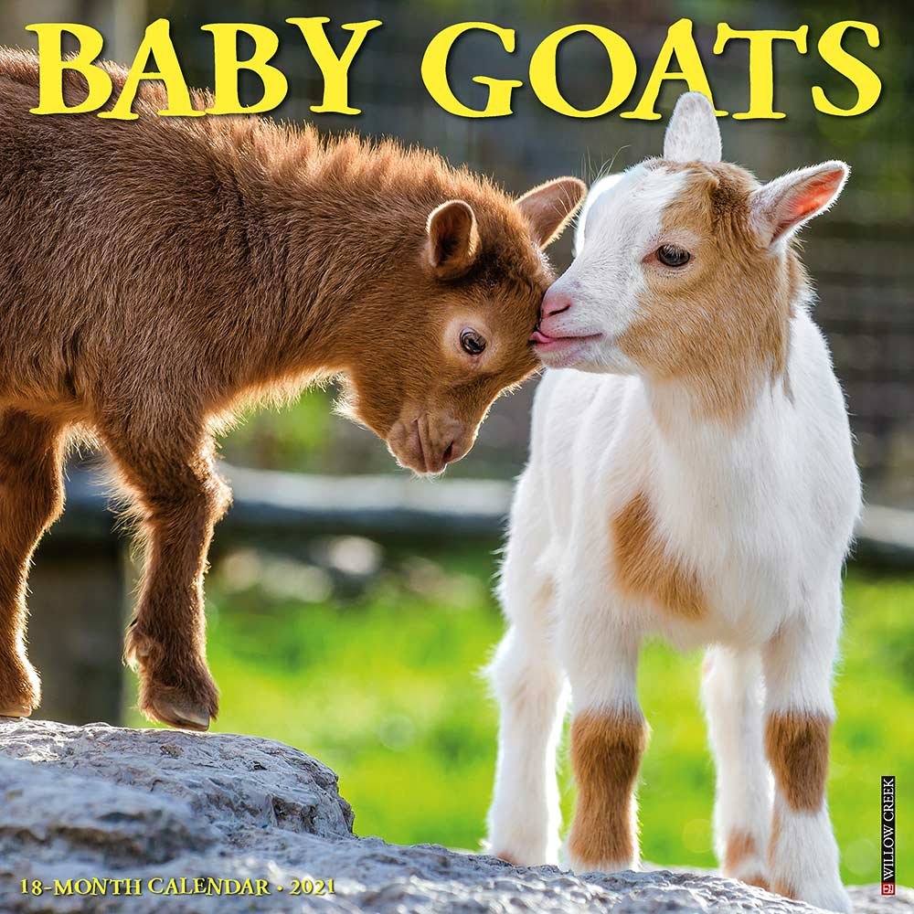 2021 Baby Goats Calendar Willow Creek