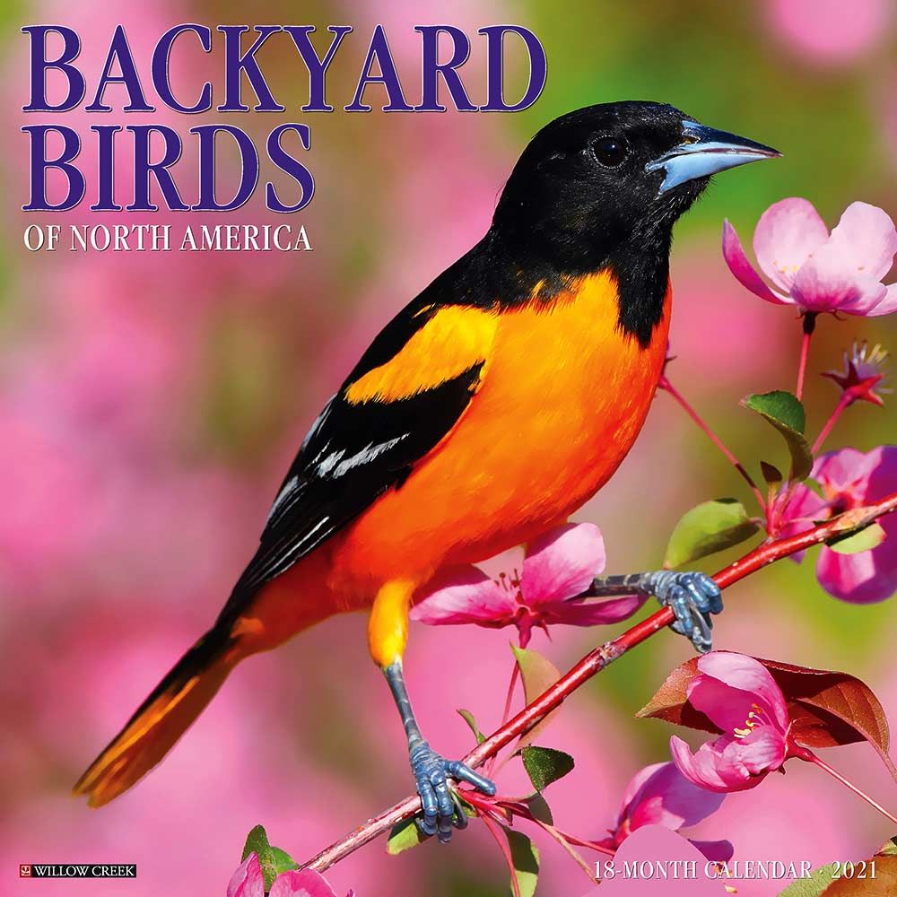 2021 Backyard Birds Calendar Willow Creek