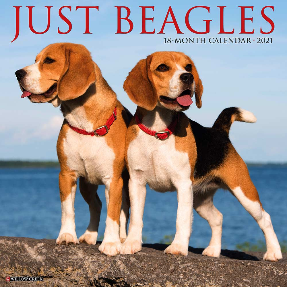 2021 Beagles Calendar Willow Creek Press
