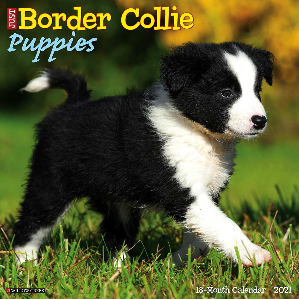 2021 Border Collie Puppies Calendar Willow Creek