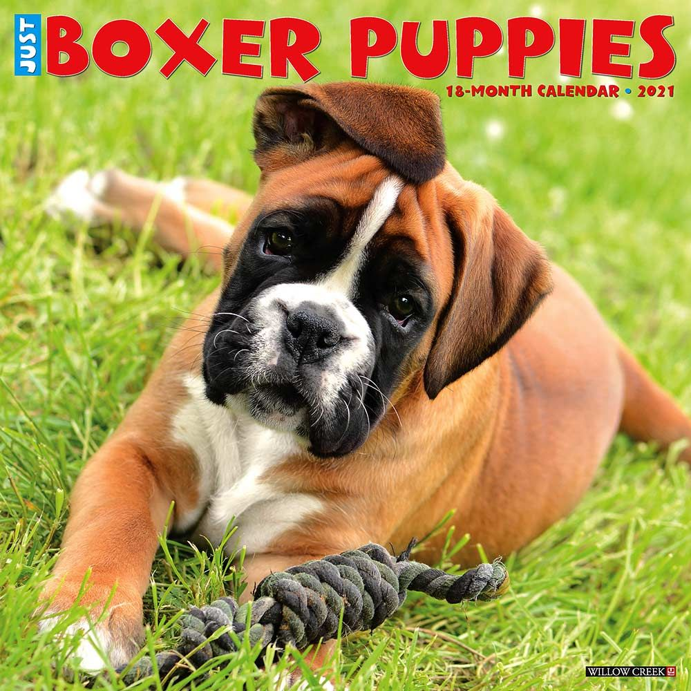 2021 Boxer Puppies Calendar Willow Creek