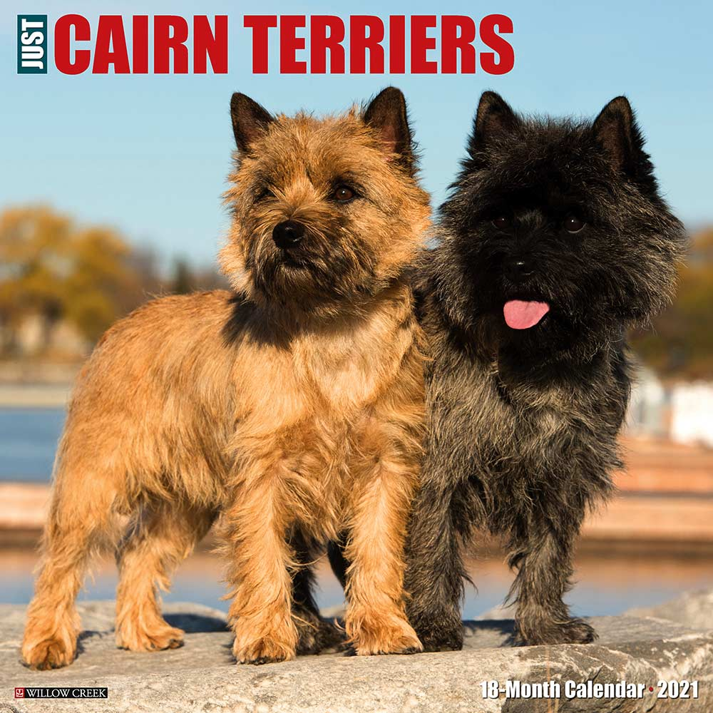 2021 Cairn Terriers Calendar Willow Creek Press