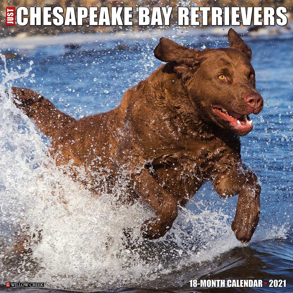 2021 Chesapeake Bay Retrievers Calendar Willow Creek Press