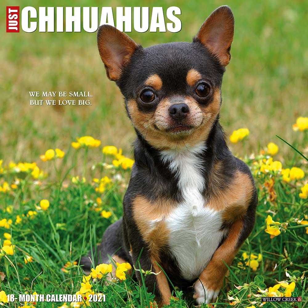 2021 Chihuahuas Calendar Willow Creek