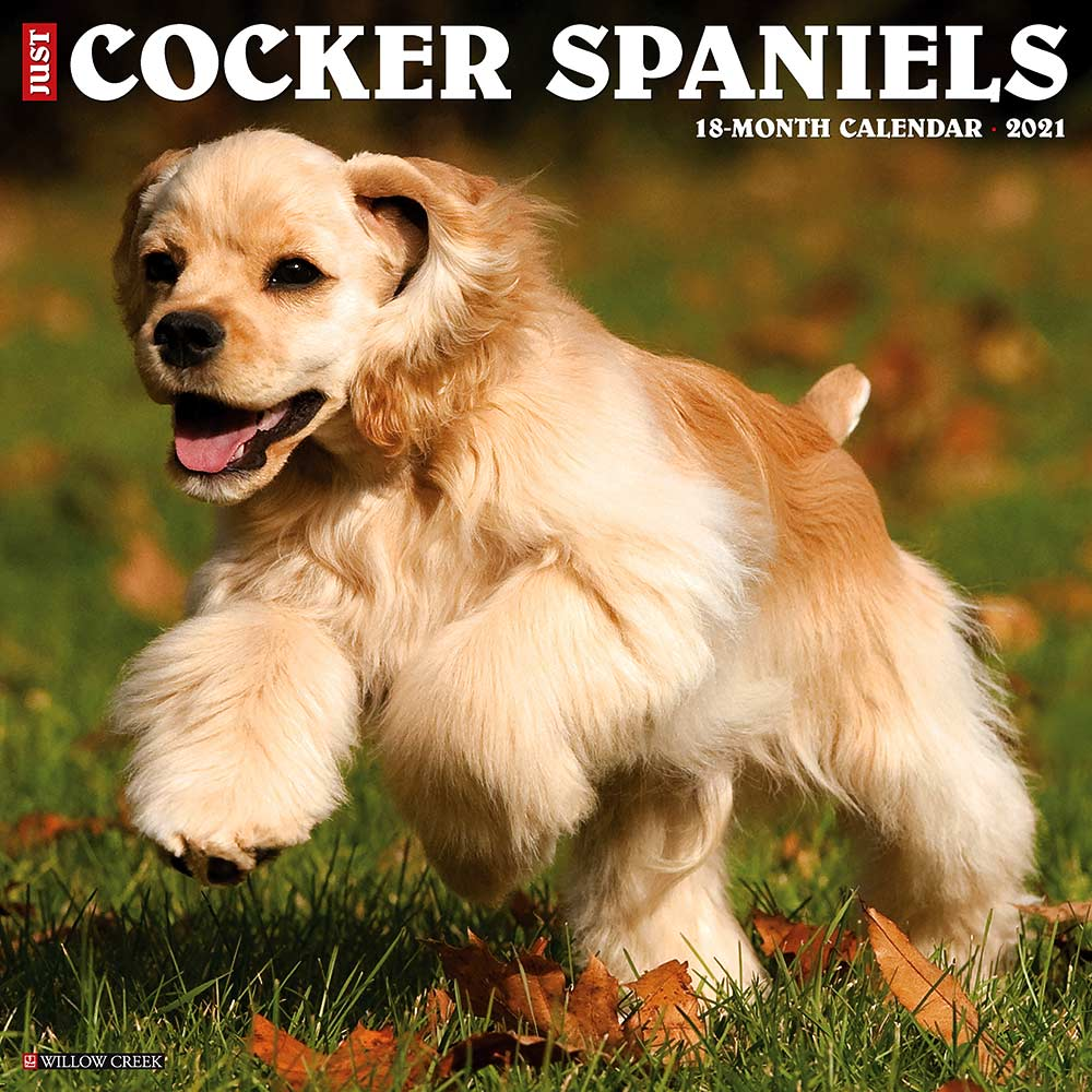 2021 Cocker Spaniels Calendar Cocker Willow Creek Press