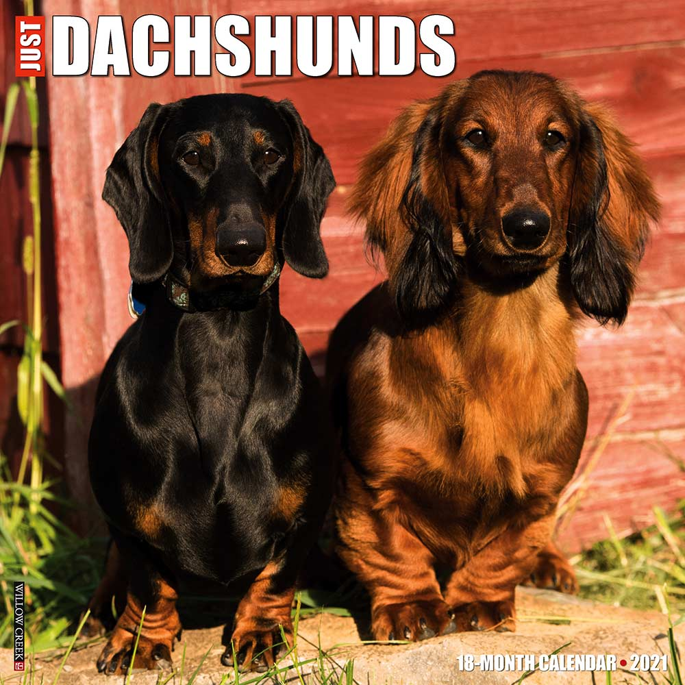 2021 Dachshunds Calendar Willow Creek