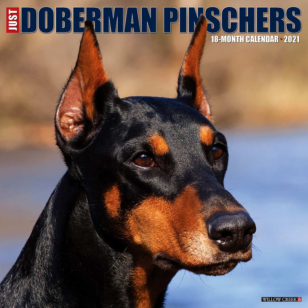 2021 Dobermans Calendar Willow Creek Press