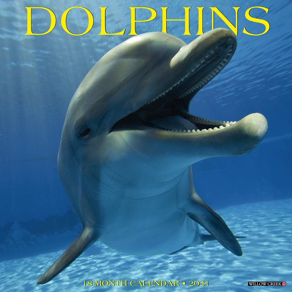 2021 Dolphins Calendar Willow Creek