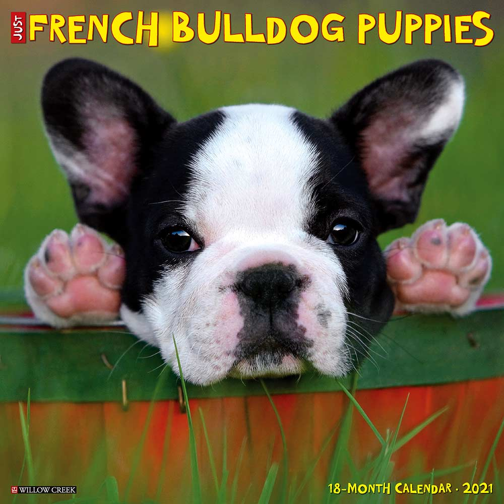 2021 French Bulldog Puppies Calendar