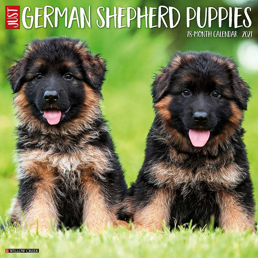 2021 German Shepherd Puppies Calendar Willow Creek