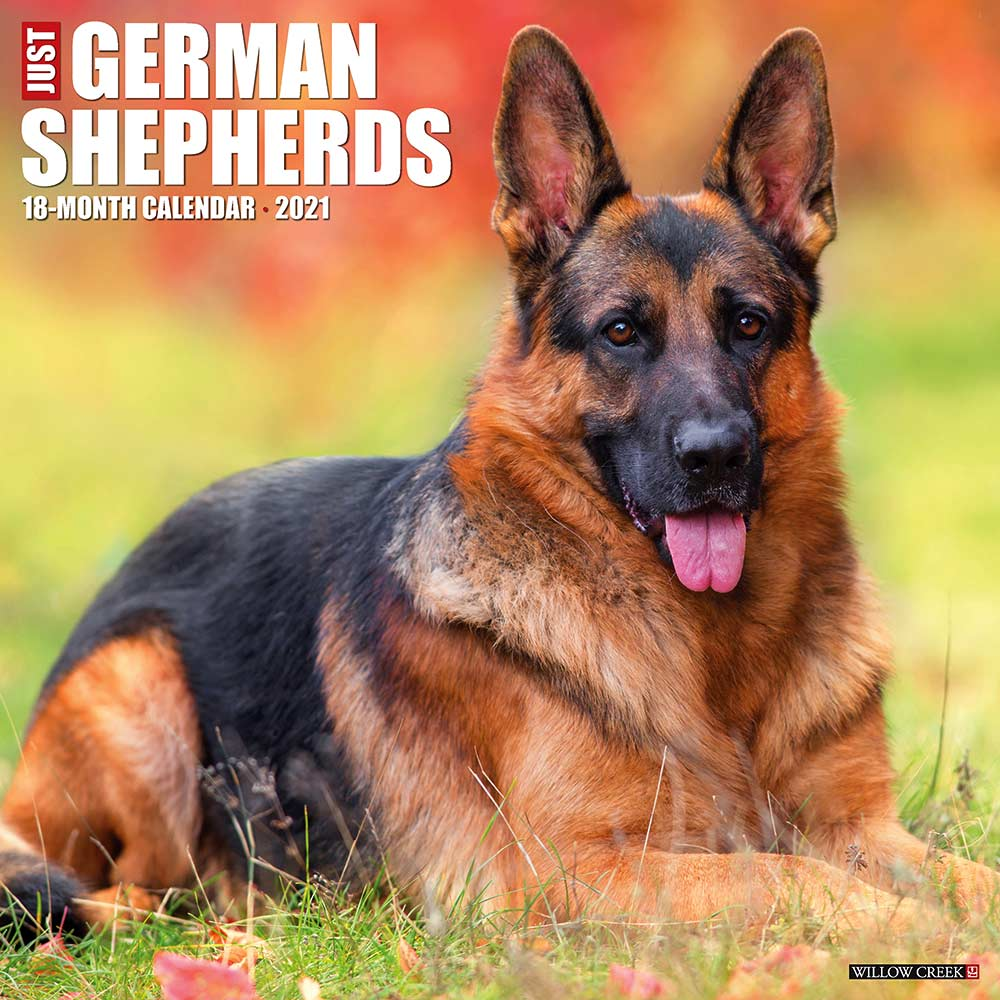 2021 German Shepherds Calendar Willow Creek Press