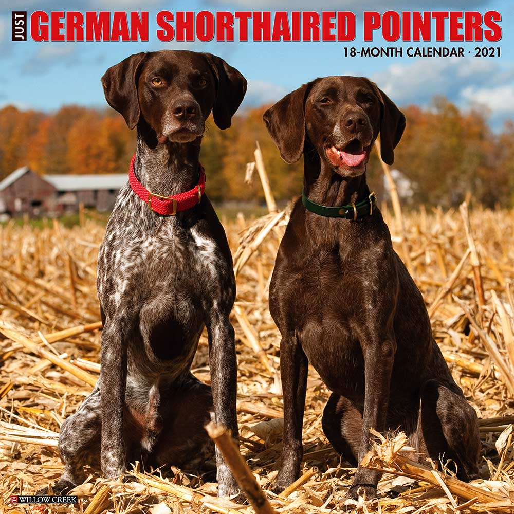 2021 German Shorthair Pointers Calendar Willow Creek Press