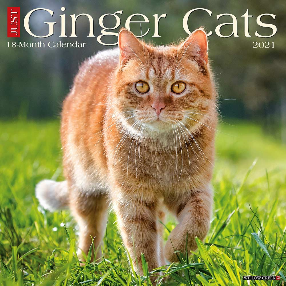 2021 Ginger Cats Calendar Willow Creek