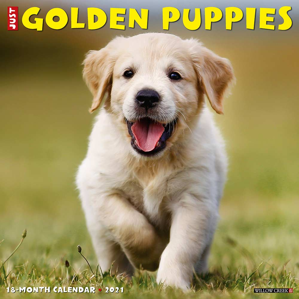 2021 Golden Puppies Calendar Willow Creek