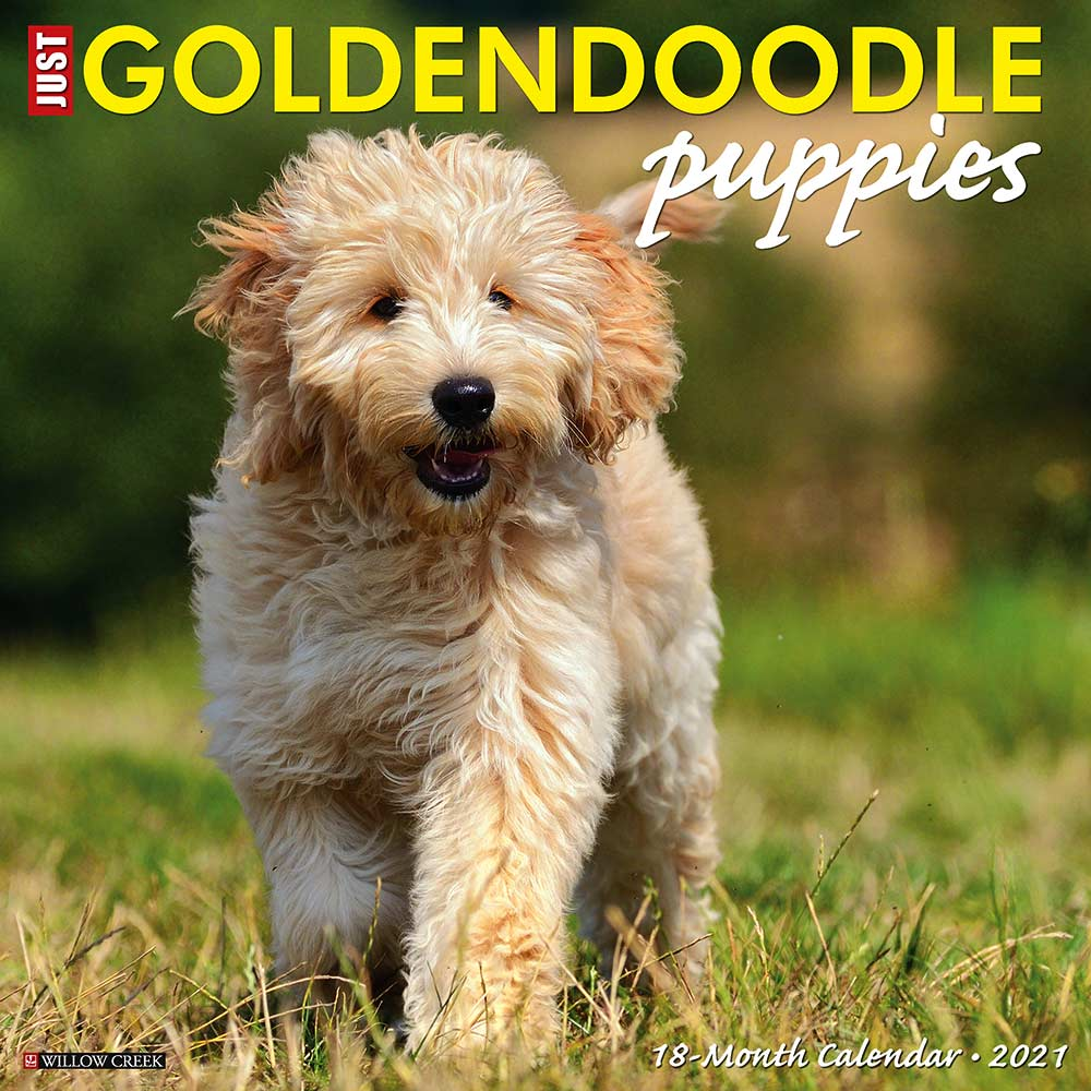 2021 Goldendoodle Puppies Calendar