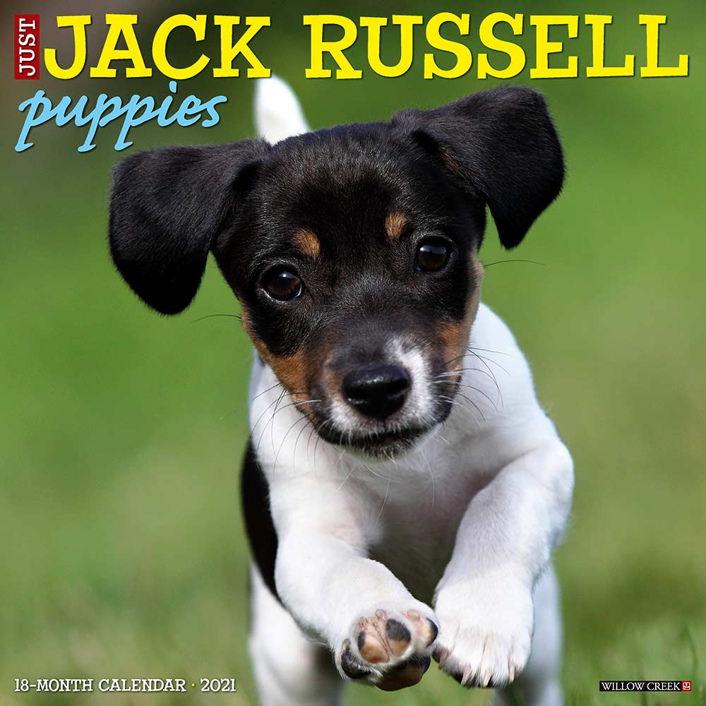 2021 Jack Russell Puppies Calendar Willow Creek