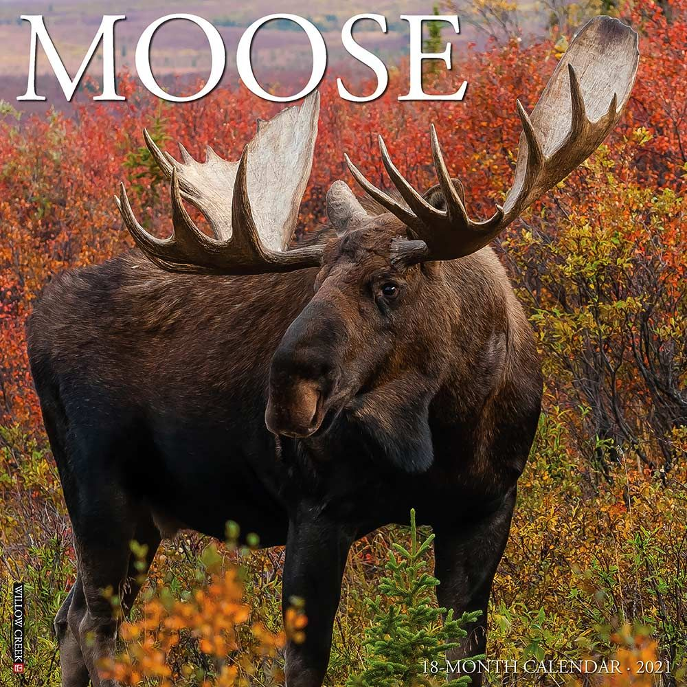 2021 Moose Calendar Willow Creek