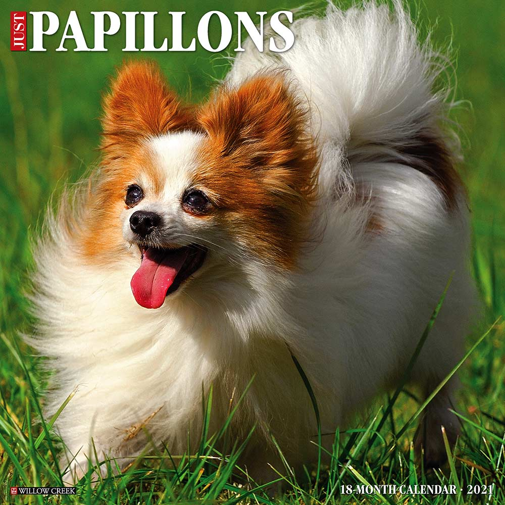 2021 Papillons Calendar Willow Creek