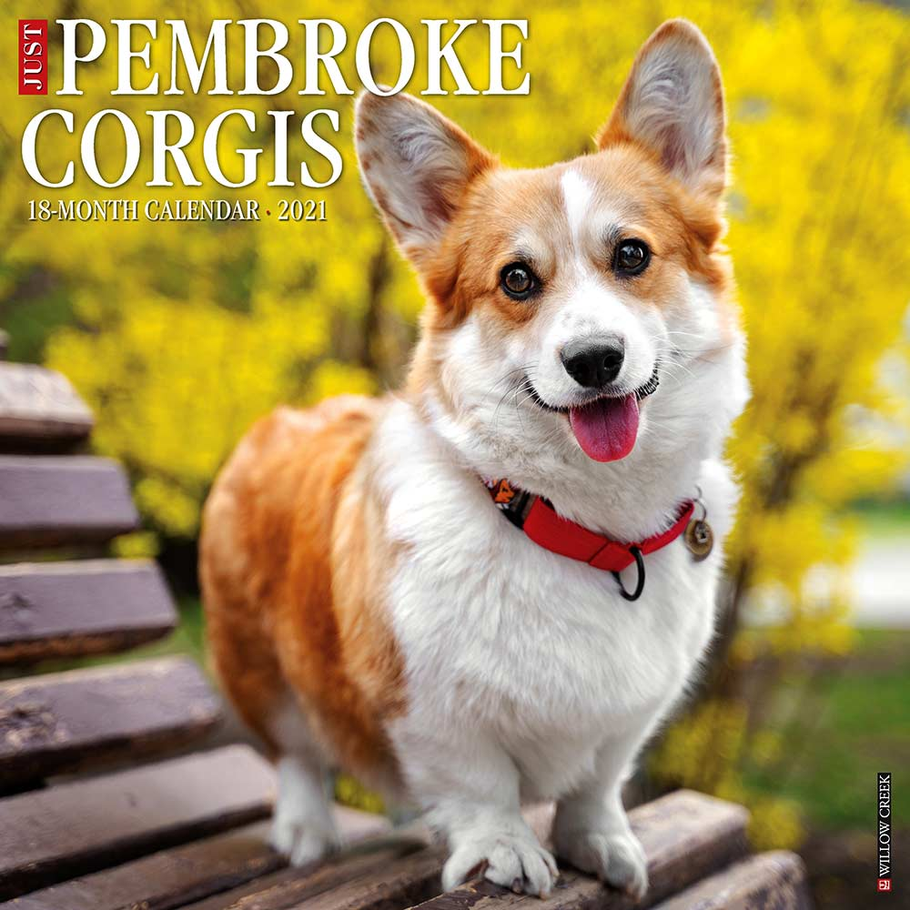 2021 Pembroke Corgis Calendar Willow Creek Press