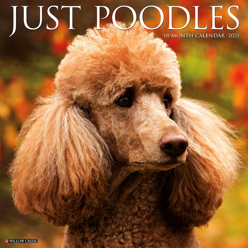 2021 Poodles Calendar Willow Creek Press