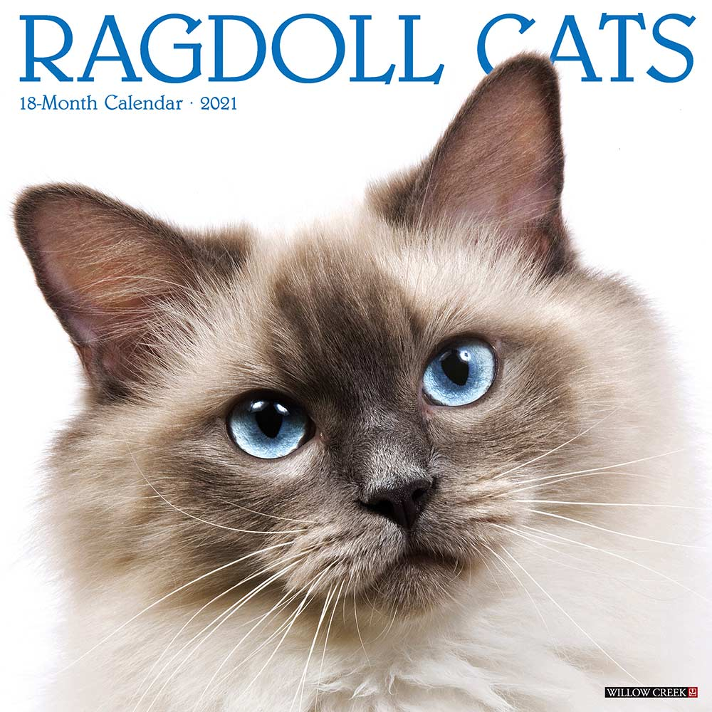 2021 Ragdoll Cats Calendar Willow Creek
