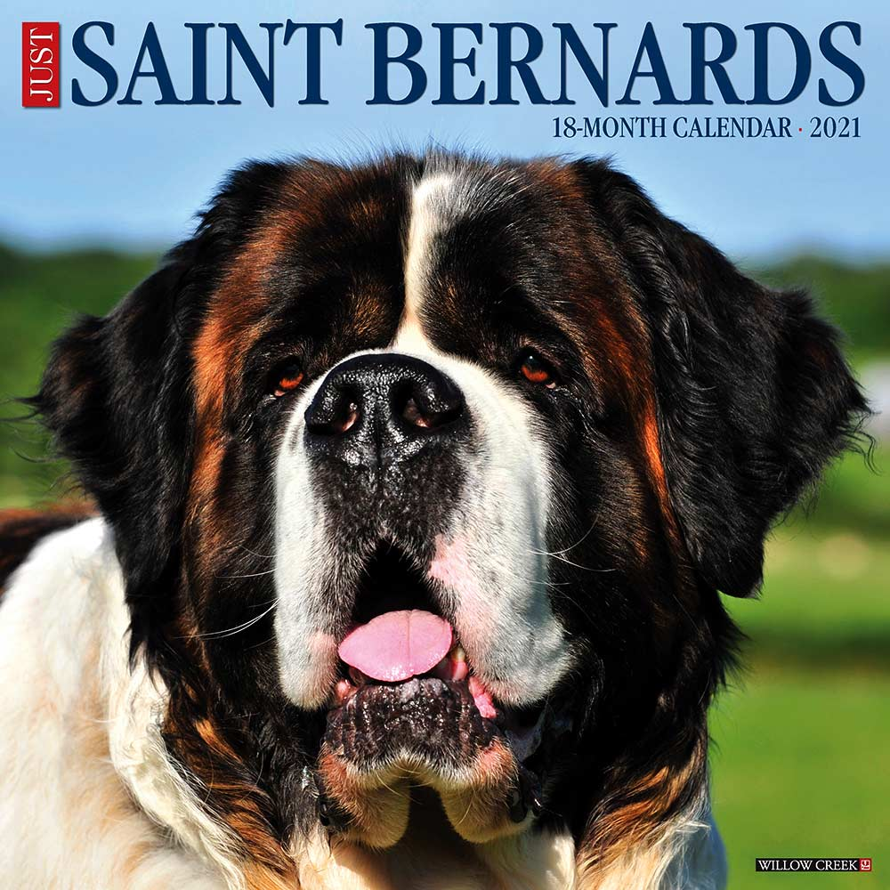2021 Saint Bernards Calendar Willow Creek