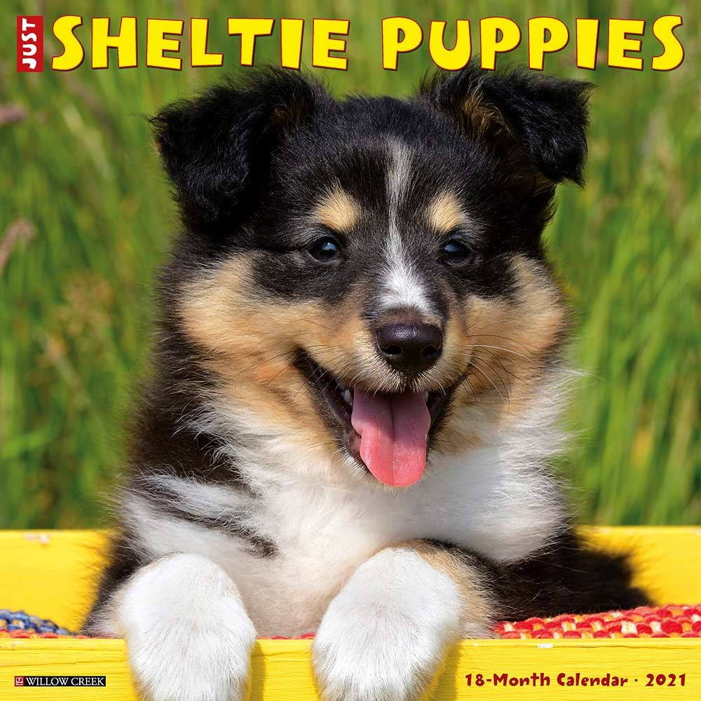 2021 Sheltie Puppies Calendar