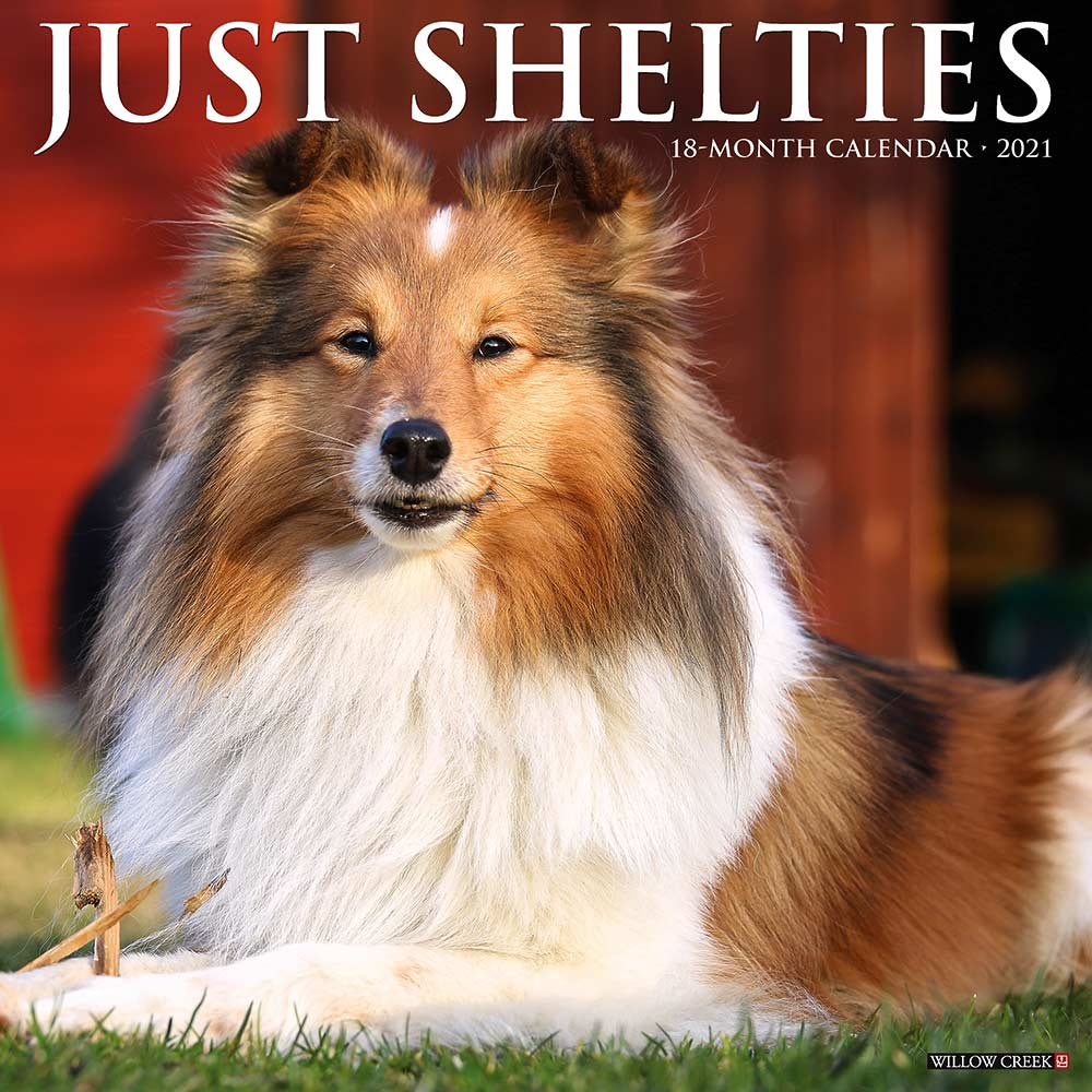 2021 Shelties Calendar Willow Creek Press