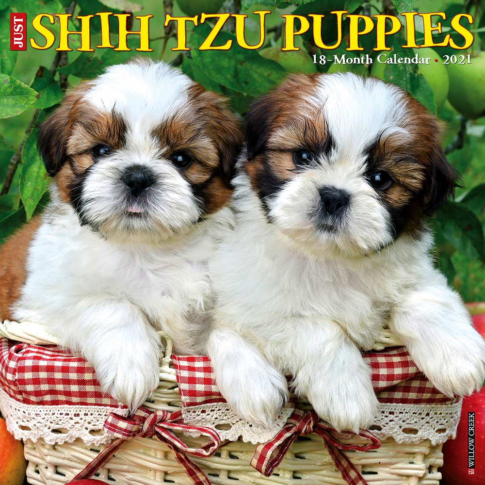 2021 Shih Tzu Puppies Calendar Willow Creek