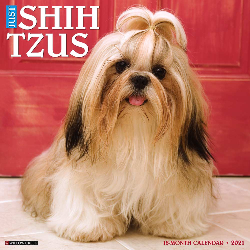 2021 Shih Tzus Calendar Willow Creek