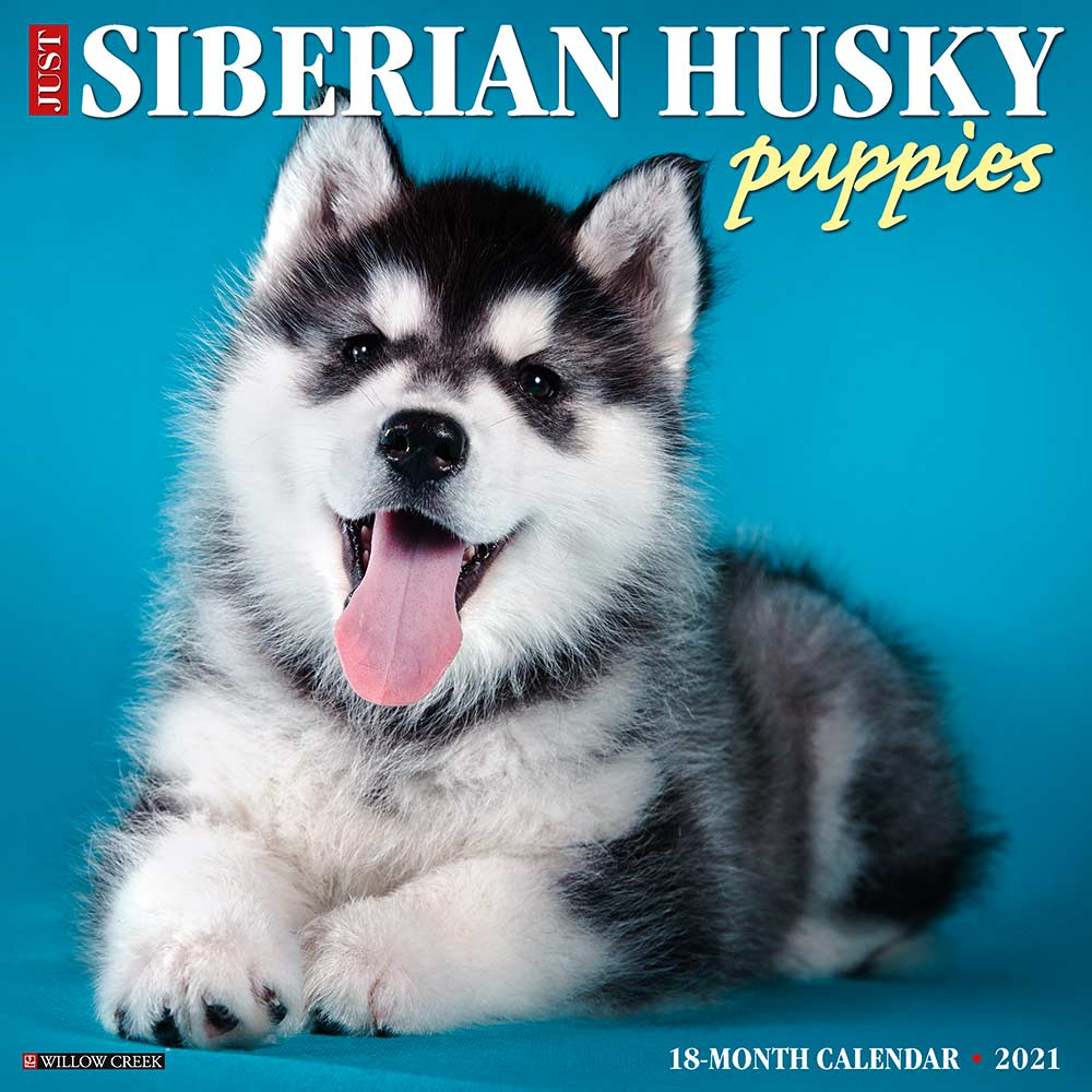 2021 Siberian Husky Puppies Calendar Willow Creek